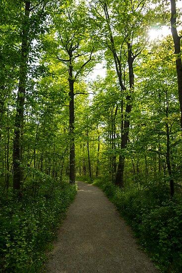 Forest Path by Georgia Mizuleva