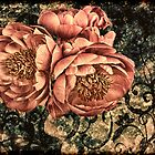 Peony Dreams by © Kira Bodensted