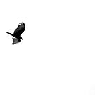 Turkey Vulture Flying by lindsycarranza