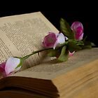 book and rose by slavikostadinov
