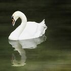 Swan Reflected by Lea  Weikert