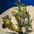 Sea Horses © by Mary Campbell