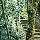 Amazon Jungle Stairs by Darren Freak
