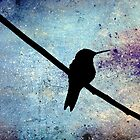 Grunge  Hummingbird by angelandspot