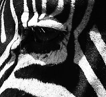Zebra Eye by aidan  moran