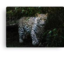 jungle-cat Canvas Print