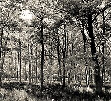 A English forest by DavidHornchurch