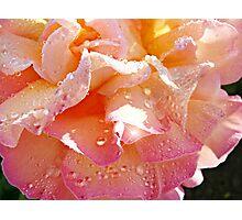 Peaches & Cream Photographic Print