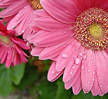 """Pink Daisy Of Hope"" by Gail Jones"