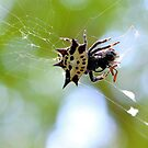 Jewelled Spider At Lunch by Dawne Dunton