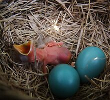 First to Hatch ~ Baby Robin by Jan  Tribe