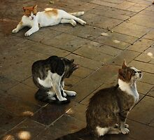 Cats in Old Town by mesaana