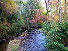 Mountain Stream by Ginny York