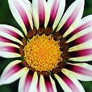 Striped Contrast by Debbie Oppermann
