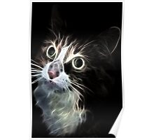 <º))))>< CAT LOOKS VERSION ONE CARD/PICTURE<º))))><  Poster