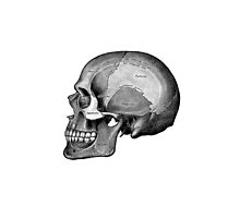 Grey's Anatomy Skull (Black & White) by Ninboy