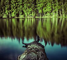 Tweezers by Matti Ollikainen
