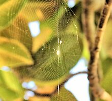 A Spider in my Magnolia Tree by aprilann
