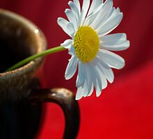 Daisy and Coffee Cup with Red by KellyHeaton