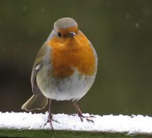 Snowy Christmas Robin by Peter Barrett