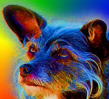 Terrier Mix Dog Adoring Eyes In Abstract by SmilinEyes