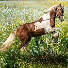 Gypsy Meadow by Tarrby