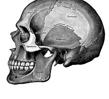 Grey's Anatomy Skull (Black & White, Large) by Ninboy