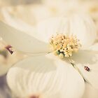 Soft Flower by Lindsay Osborne