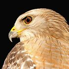 A classic profile of a hawk ! by jozi1