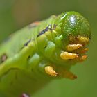 Caterpillar by KEBSD123