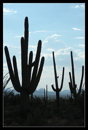 Silent Saguaro Warriors  by Kimberly Chadwick