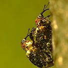 strange  beetle by davvi