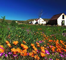 Wild flowers in Namakwaland by Essenceoflight