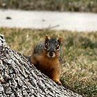 Spy Squirrel by Keala