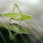 Grasshopper in Glass by Linda Long