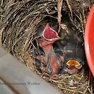 Warbler Babies by DottieDees