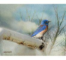 Little Blue Bird Photographic Print