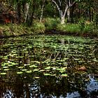 Galvans Gorge Water Lily Pond - Kimberley WA by Ian English