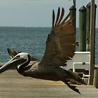 Pelican over Pier by Scott Dovey