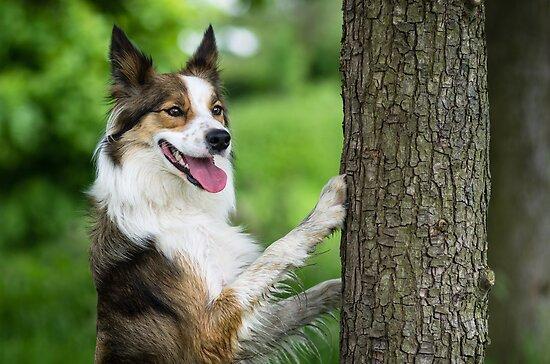 The Dog and the Tree by Karen Havenaar