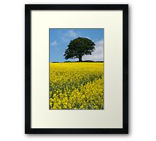 Sunshine Growing At The Roots Of A Tree Framed Print