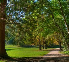 Woodland Path around Lake Bled by jcjc22