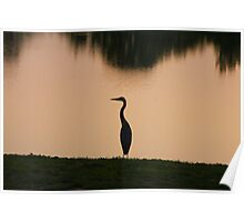 Great Blue Heron - Dusk Poster