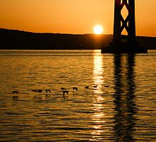 San Fransisco Bay Bridge Sunrise by Georgia Mizuleva