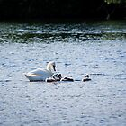Signets with mother by Ralph Goldsmith