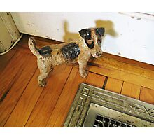 A Registered Door Dog Photographic Print