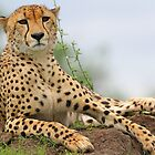 Another beautiful African big cat ! by jozi1