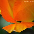 Orange Tulip by LariElka