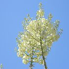 Yucca Blooms in the Sun by Navigator