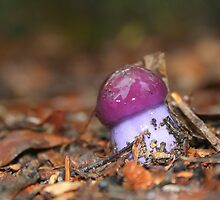 The Colour Purple by myraj